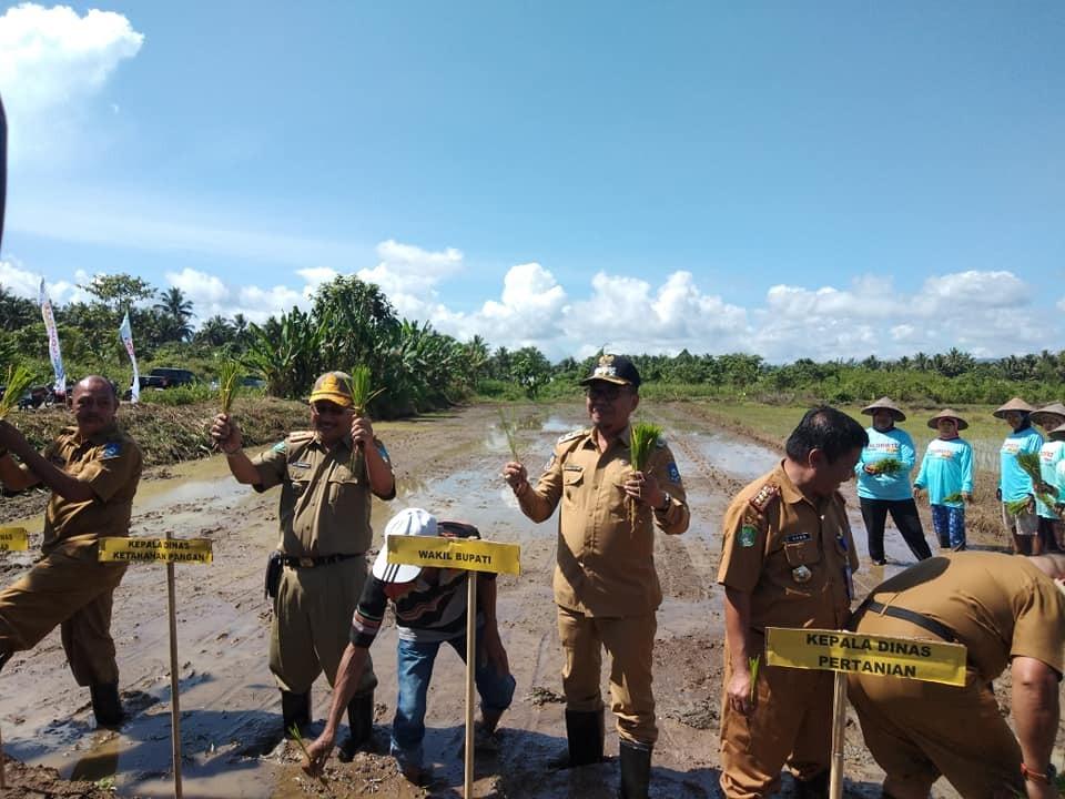 Penanaman perdana padi sawah di desa Tolabit kecamatan Kao Barat, oleh Wakil Bupati Halmahera Utara, Mukhlis Tapitapi